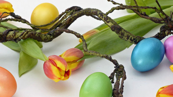 Ast mit Eiern