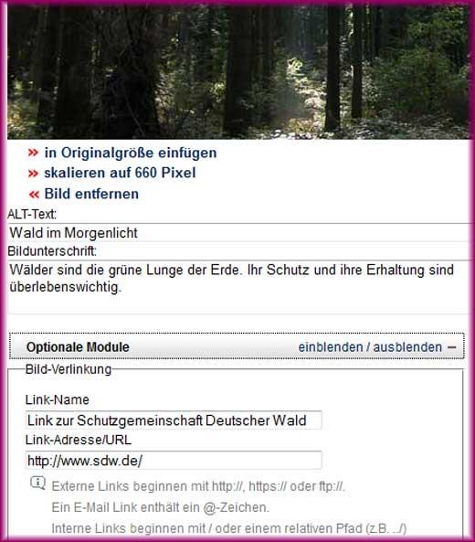 Beispiel Bild-Modul - Wald